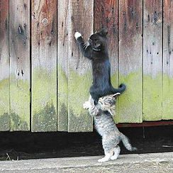 Kittens On Wall